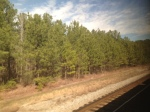 amtrak pines