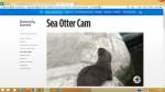 Otter Cam