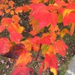 foliage-closest